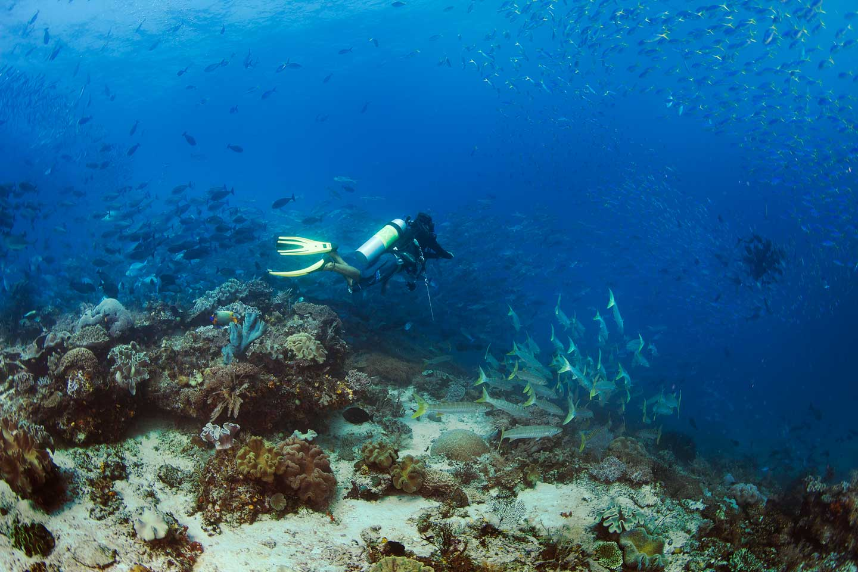 Papua paradise eco resort diving - Raja ampat dive resort ...