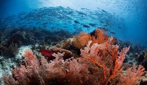 Scuba Diving conditions in Raja Ampat
