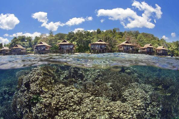 Papua Paradise Coral