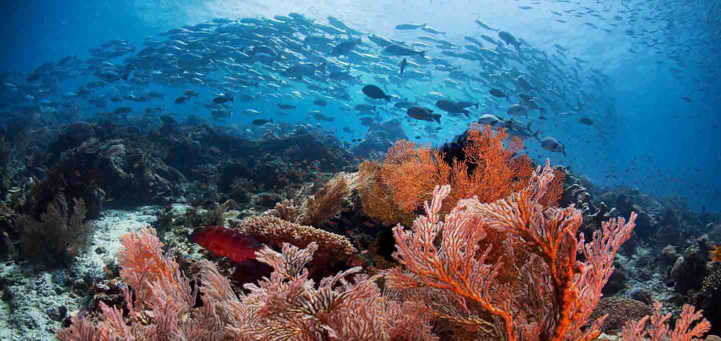 Marine Life Biodiversity of Diving Raja Ampat Diving