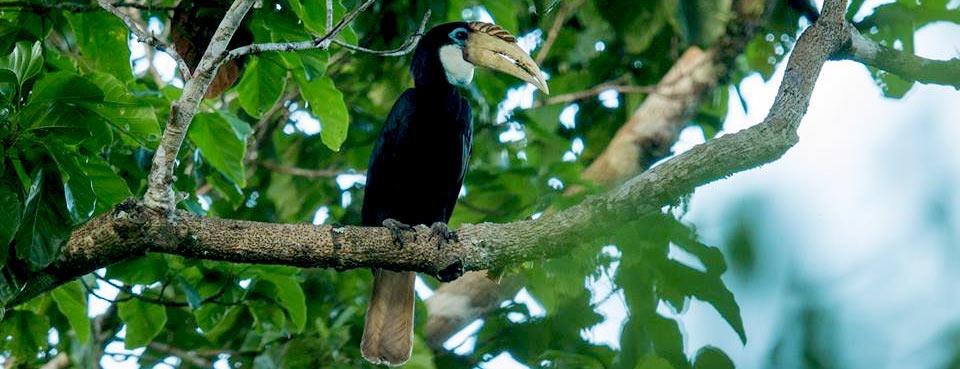 Bird in Raja Ampat Papua cockatoo birds