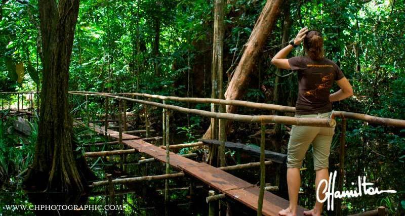 Jungle trekking in raja ampat