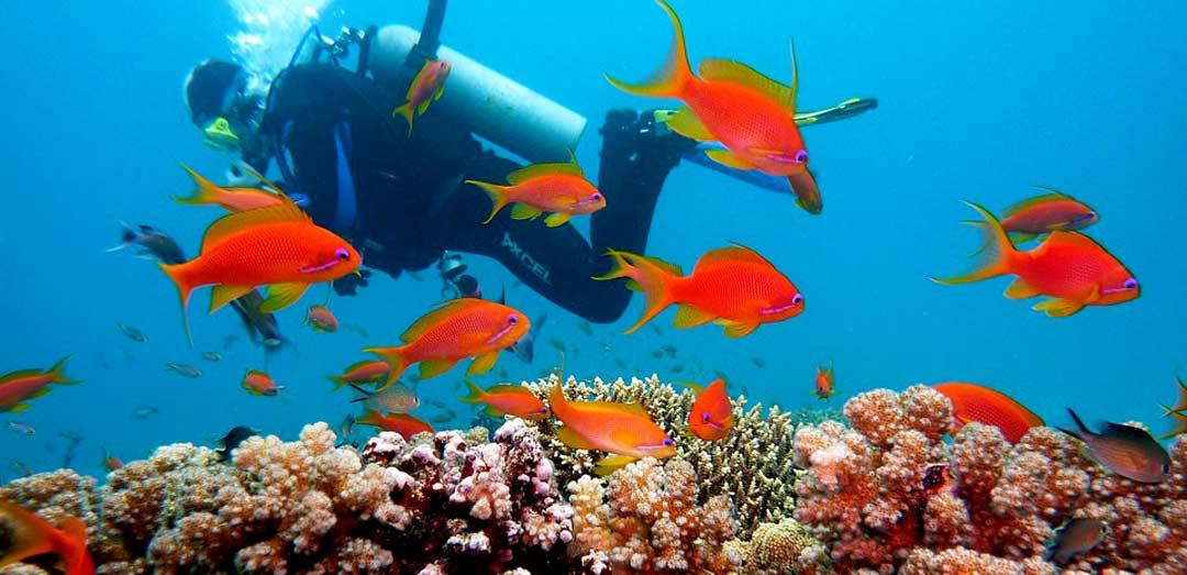 Student Reef check Diving in Raja Ampat