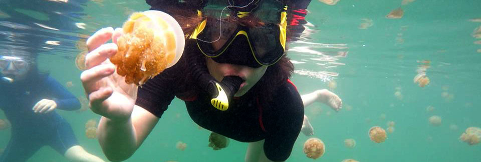 sting less jelly fish raja ampat