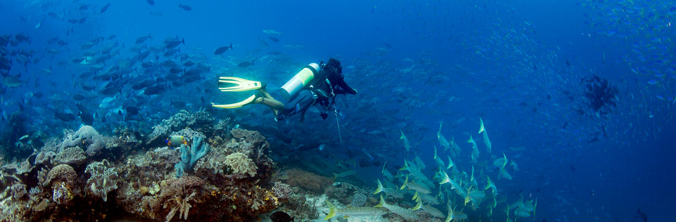 Raja Ampat diving conversations activity