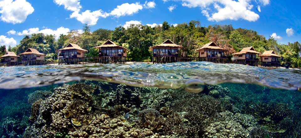 beautiful-coral-at-raja-ampat-resort