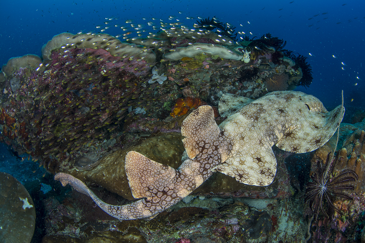 Gangga Divers at Papua Paradise Eco Resort in Raja Ampat