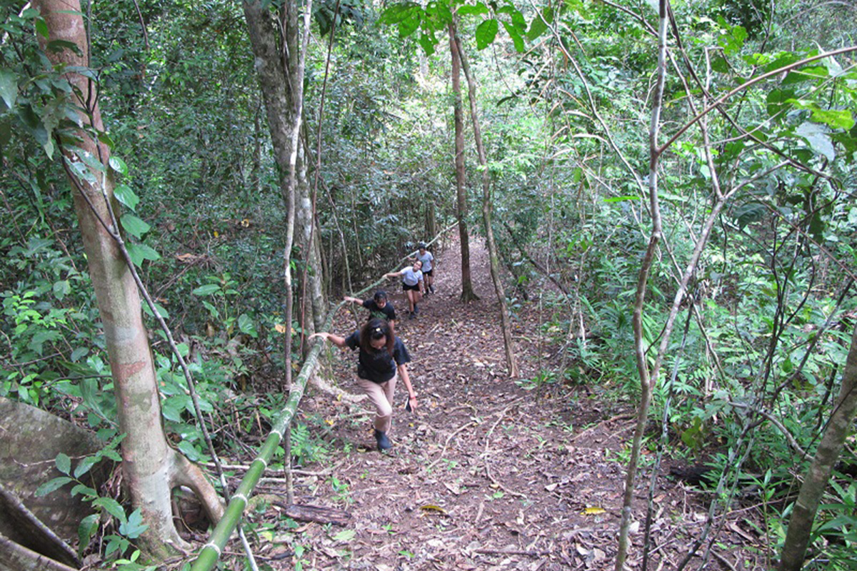 Uphill jungle trail perfect for bird spotting at Papua Paradise Eco Resort