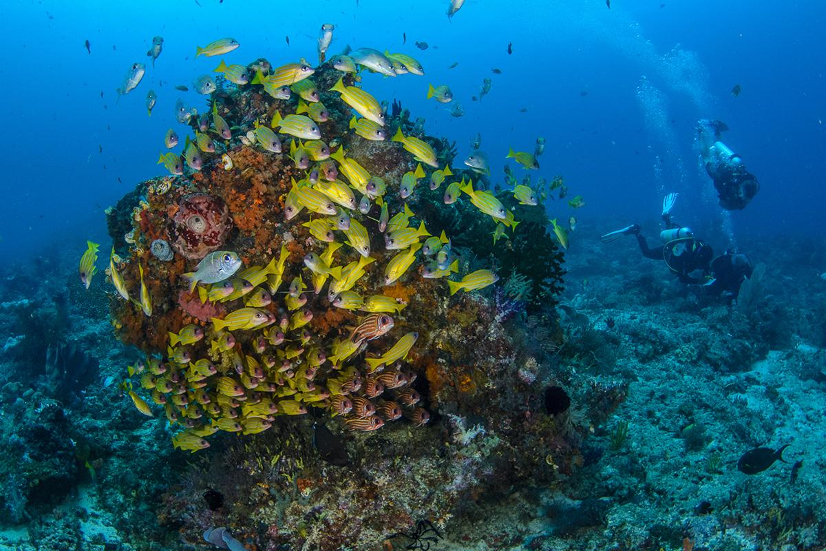 Papua Paradise PADI 5-star dive resorts in Raja Ampat