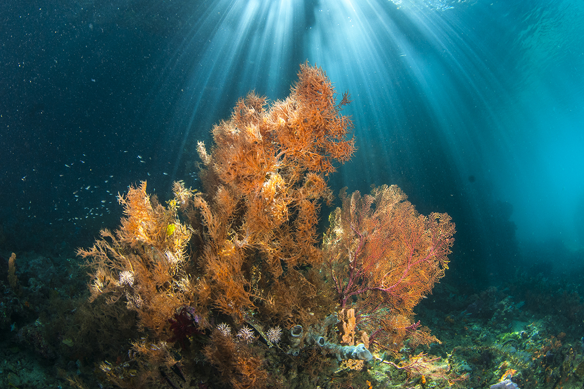 Underwater Photography Guide Raja Ampat