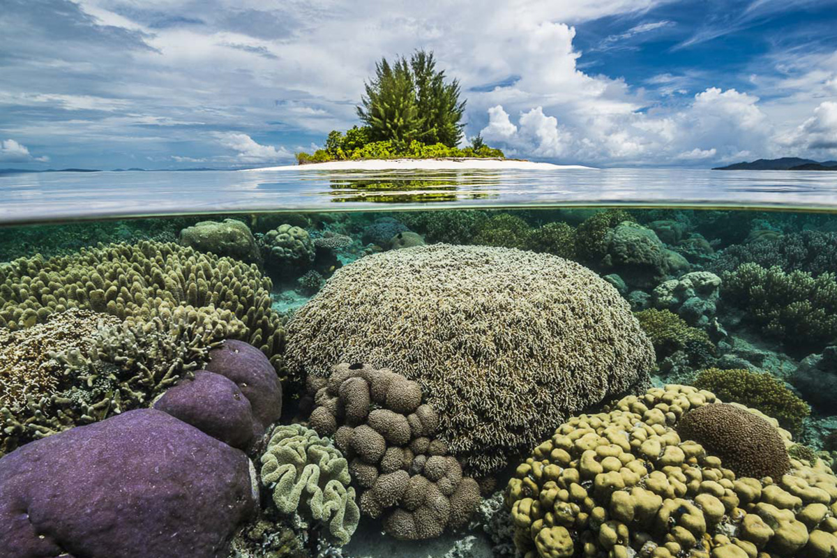 Saving Raja Ampat's Marine Biodiversity