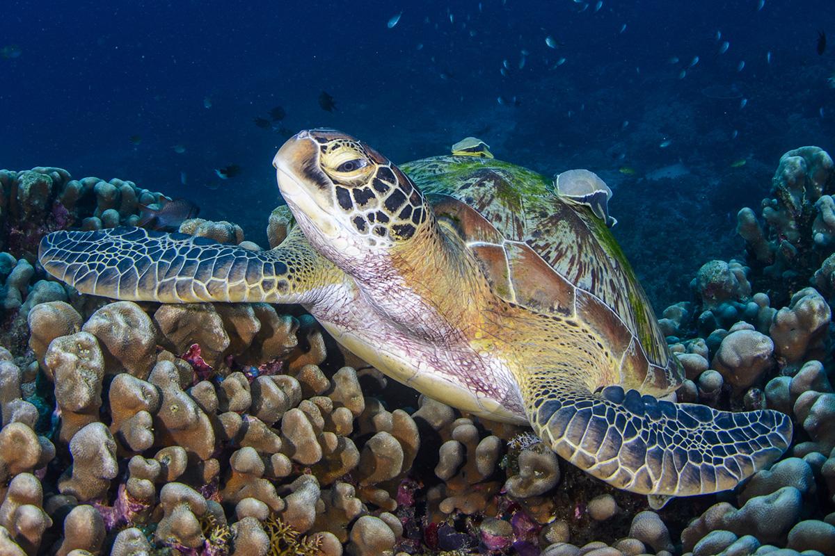 Searching for Sea Turtles in Raja Ampat