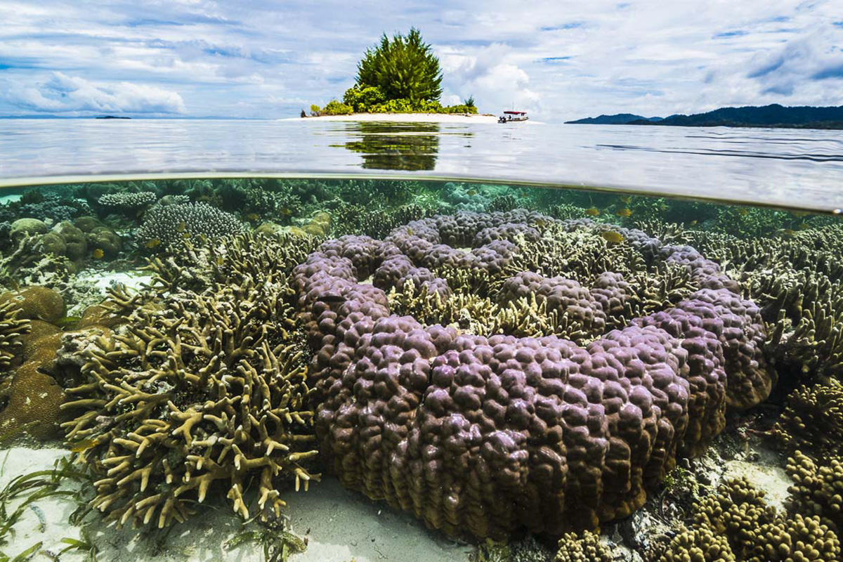Raja Ampat - What is the Coral Triangle?