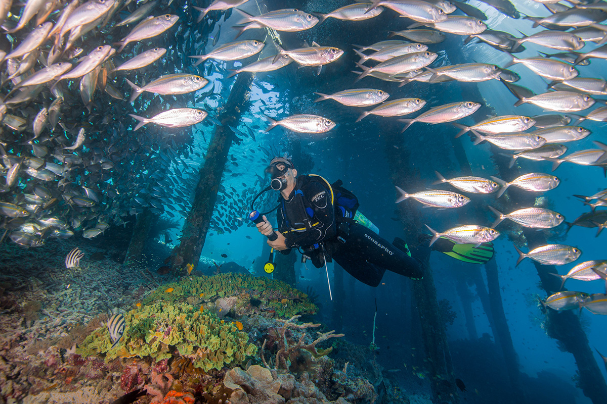 Top 5 Dive Sites in Raja Ampat