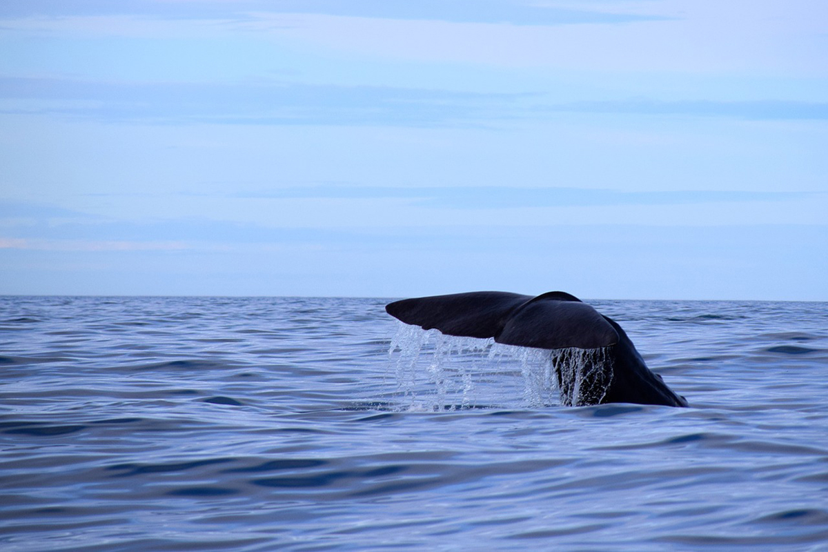 Spotting Whales and Dolphins in Raja Ampat