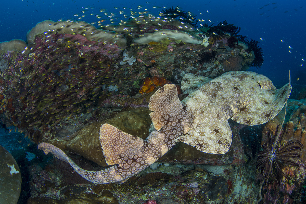 What is the 'Coral Triangle'?