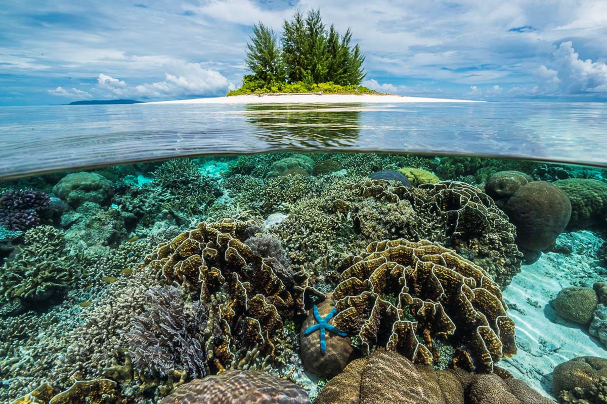 How Reef Safe Sunscreens Can Save Marine Life in Raja Ampat