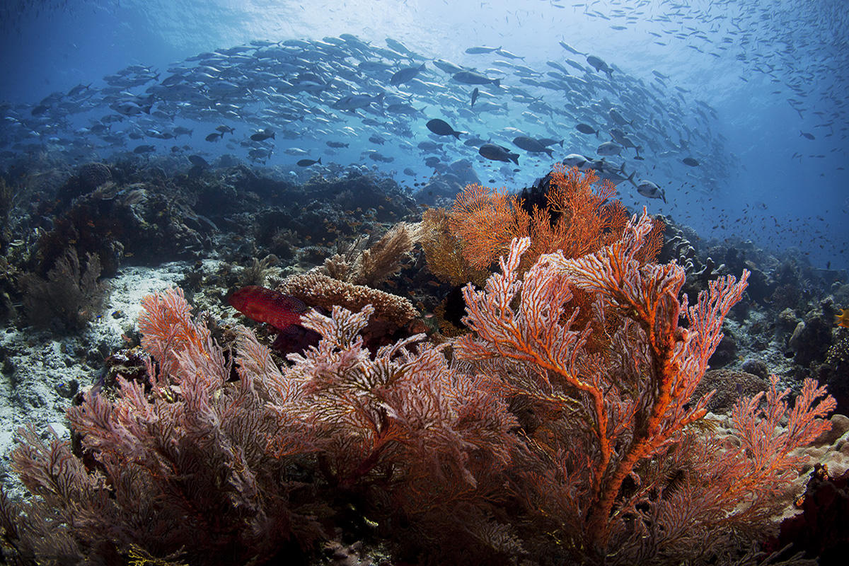Seven Facts About Raja Ampat That Will Blow Your Mind
