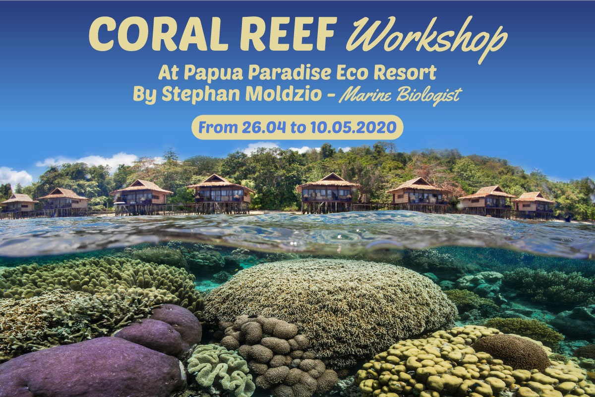 Coral Reef Workshop at Papua Paradise Eco Resort