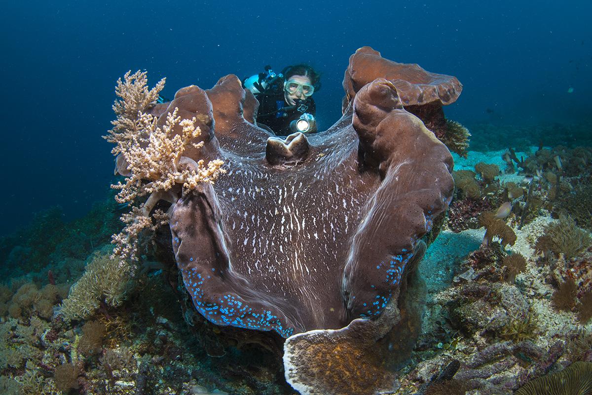 Meet the Mollusks of Raja Ampat