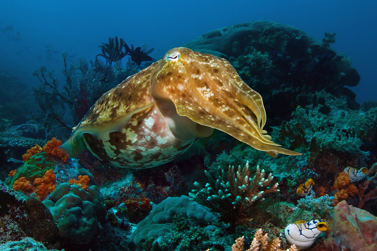 A Guide to the 3 Areas of Raja Ampat Diving: North, Central and South