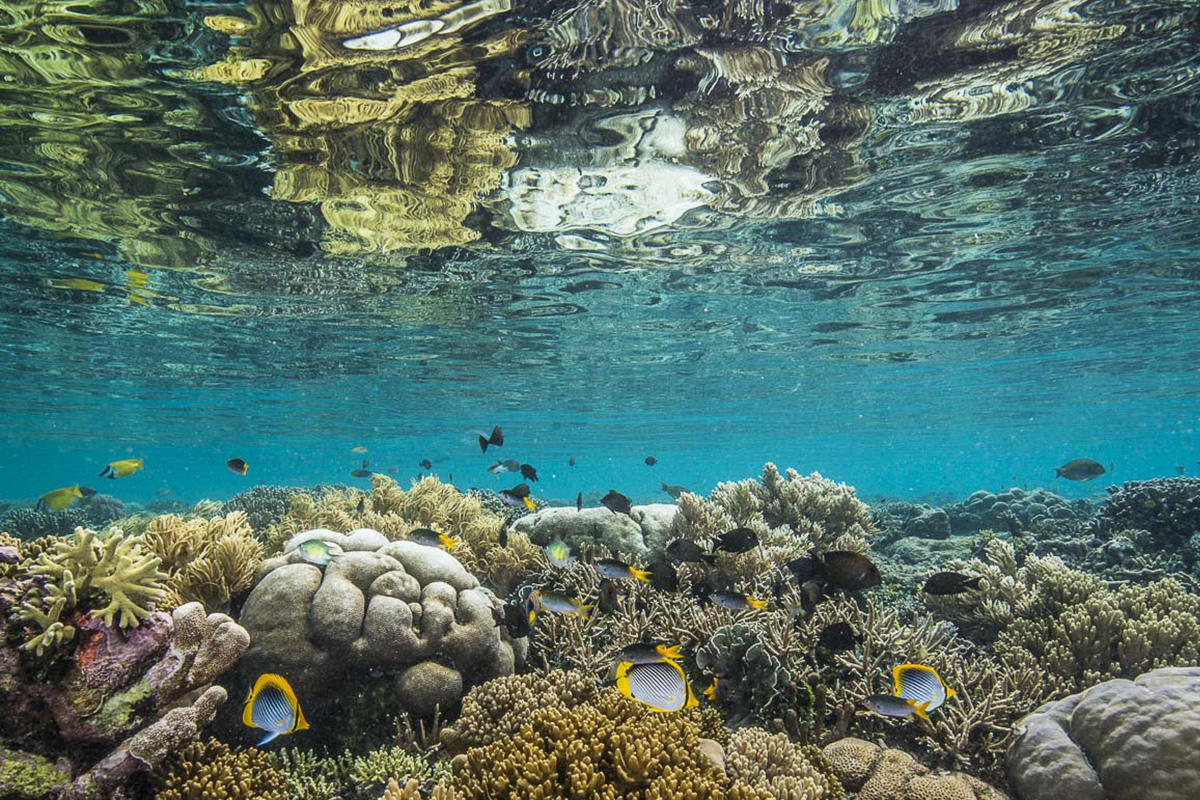 4 Reasons You Should Know About Raja Ampat